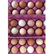 12 pk chicken eggs