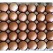 30 pk chicken eggs